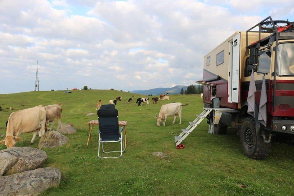 Schredder Rumänien Transalpina Camp 1 Kühe (Magirus-Deutz 90-16 mit Wohnmobil Selbstausbau)